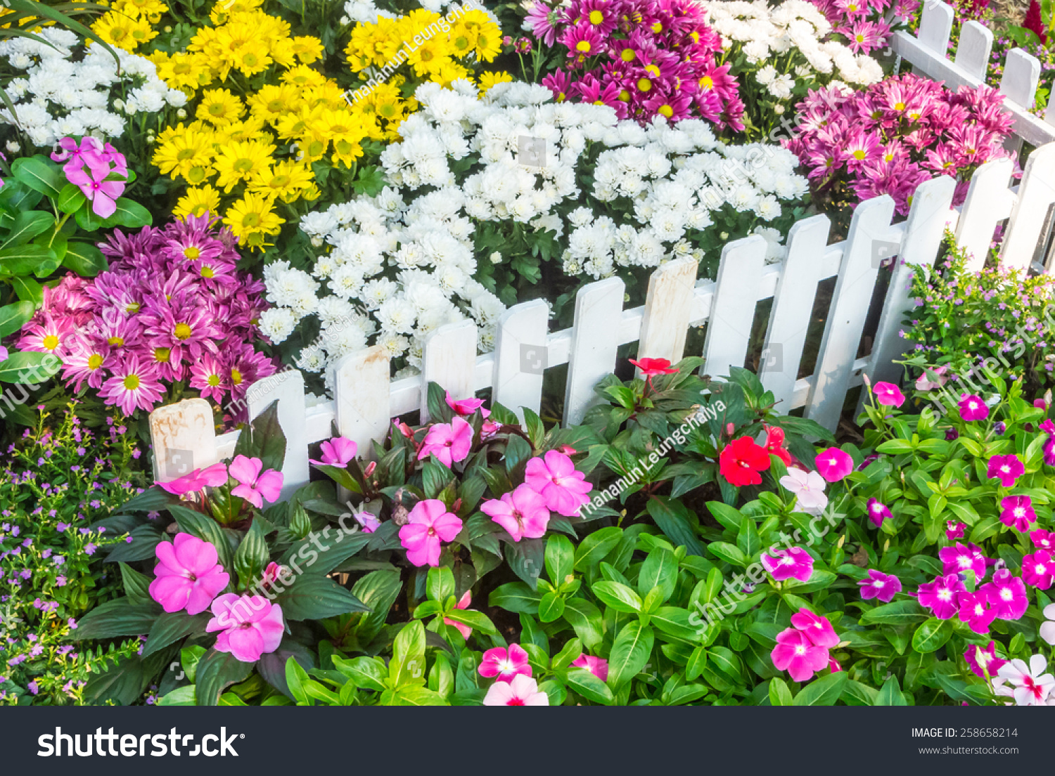 White picket fence surrounded by flowers stock photo for Flower for front yard gardens