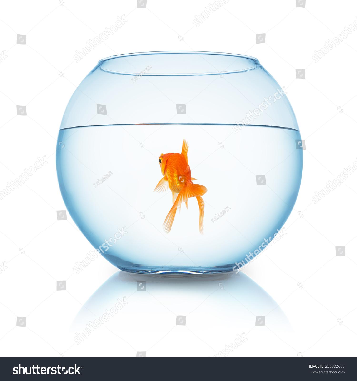 сонник рыбы в аквариуме плавают являетесь