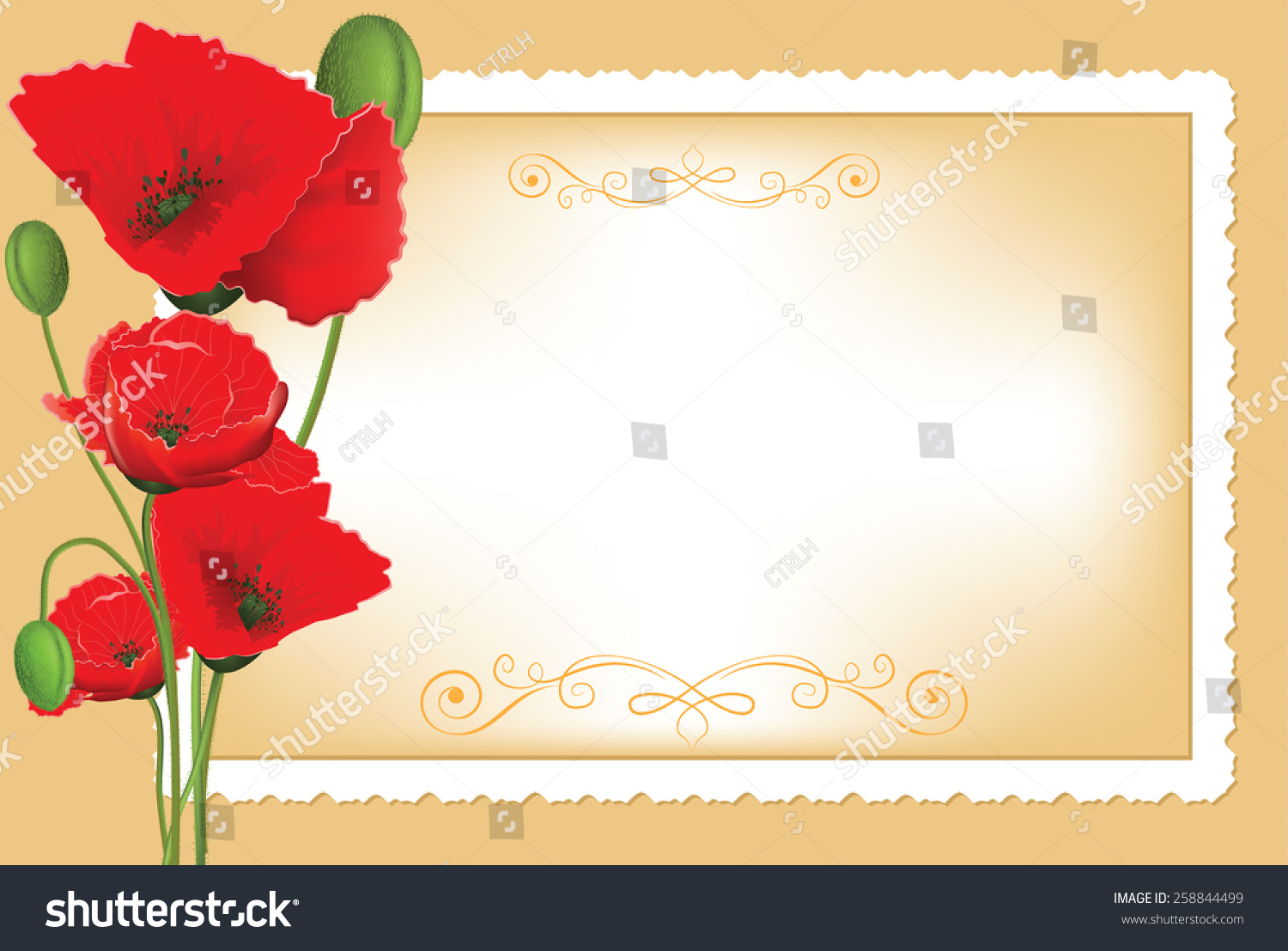 Realistic Red Poppies Flowers With A Greeting Card On The Background No Text So