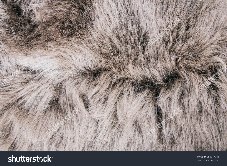 White Grey Wolf Fox Fur Natural, Animal Wildlife Concept ...