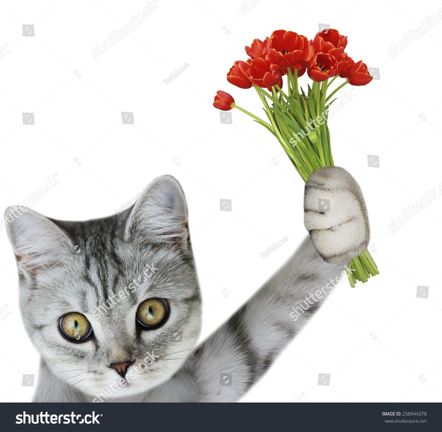 Cat Holding Bouquet Tulips Stock Photo Edit Now 258944378
