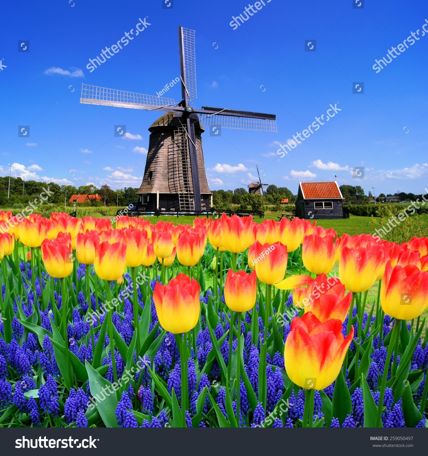 Colorful Spring Flowers Classic Dutch Windmill Stock Photo Edit Now