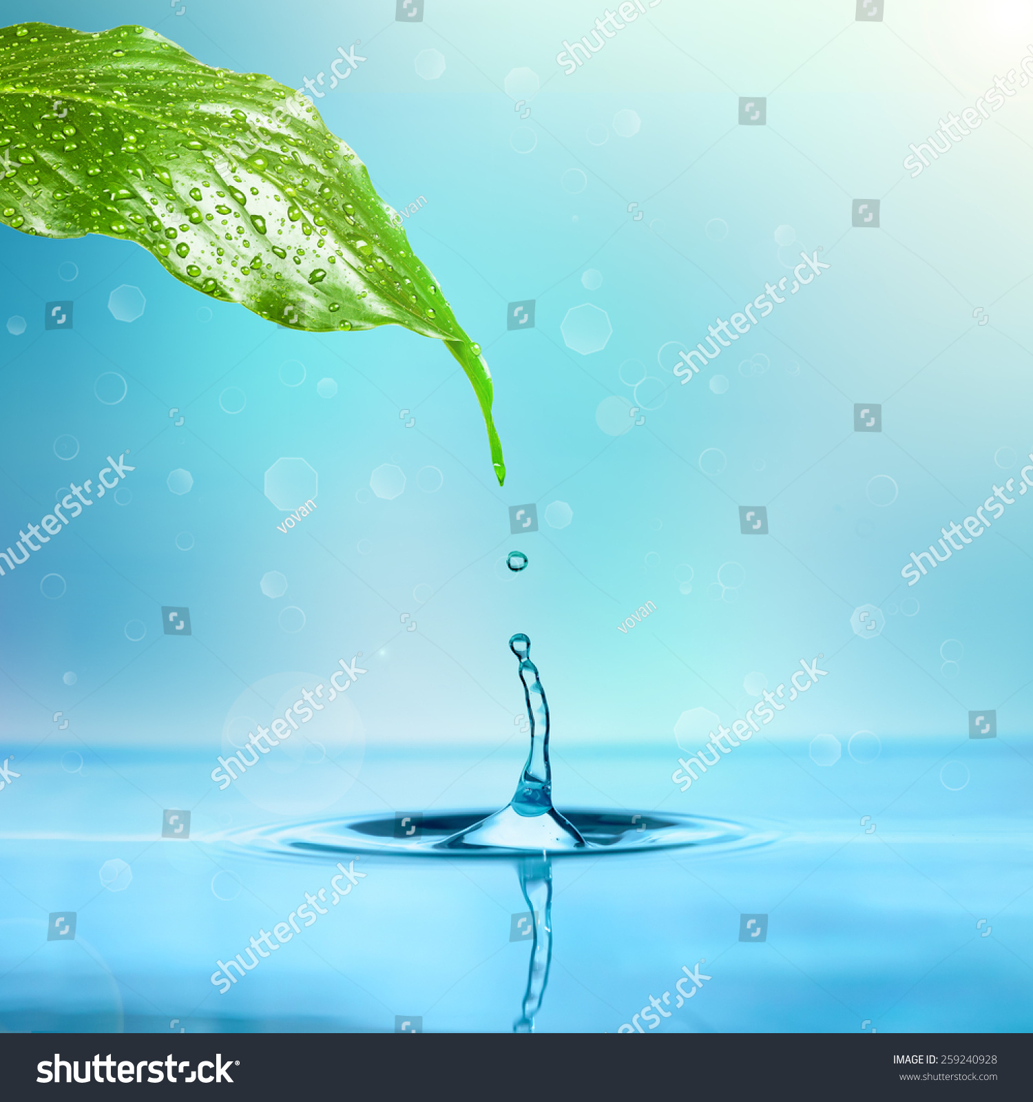 Tundish Dripping Into Water : Drop rain dripping into water leaf stock photo