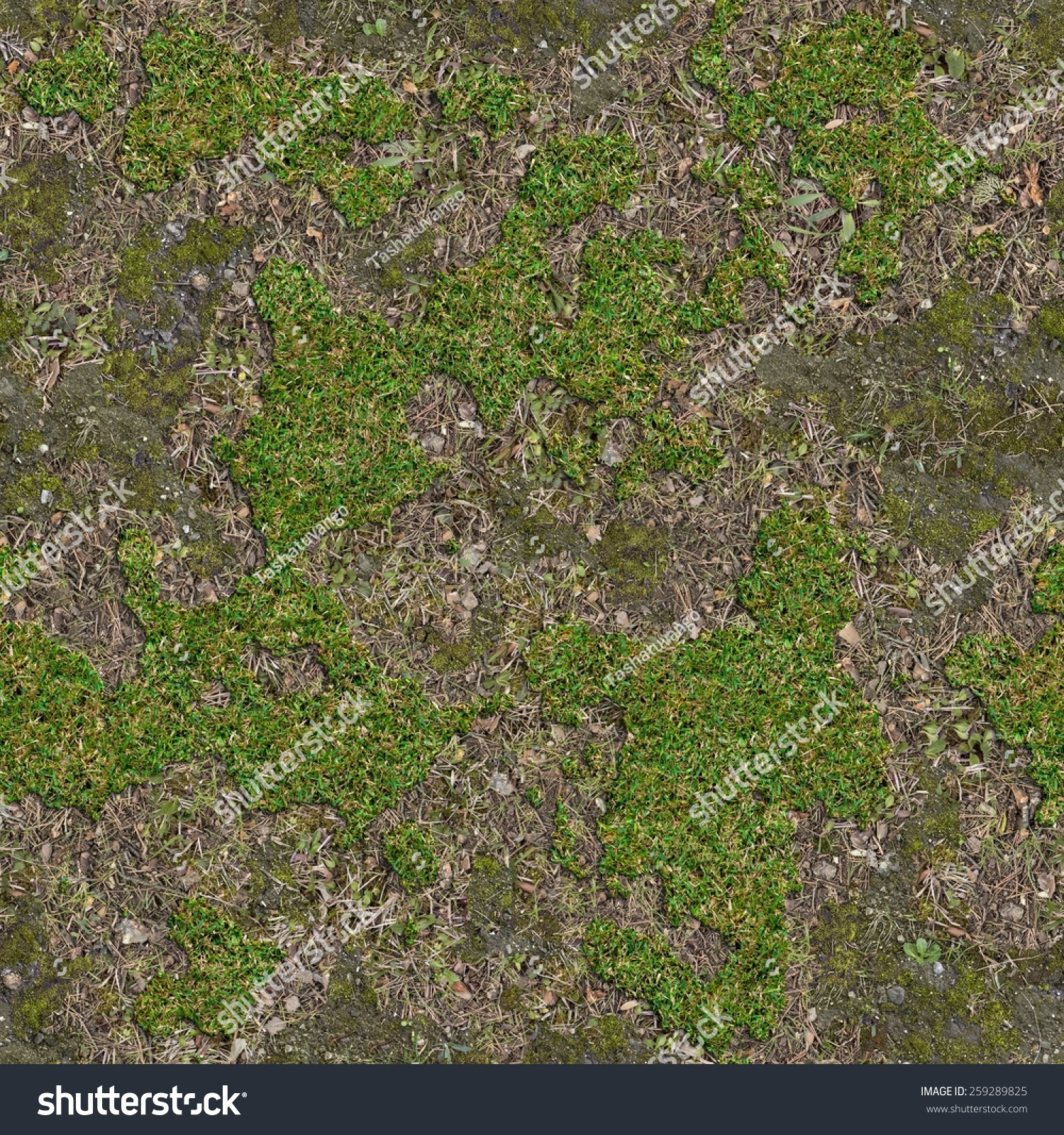 Soil covered moss green grass seamless stock photo for Soil and green