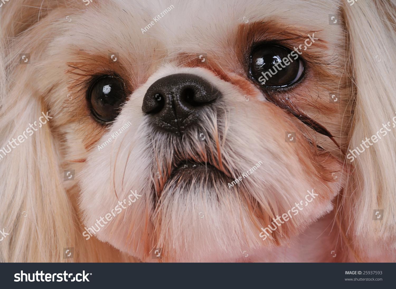 White Eye Gunk Dog