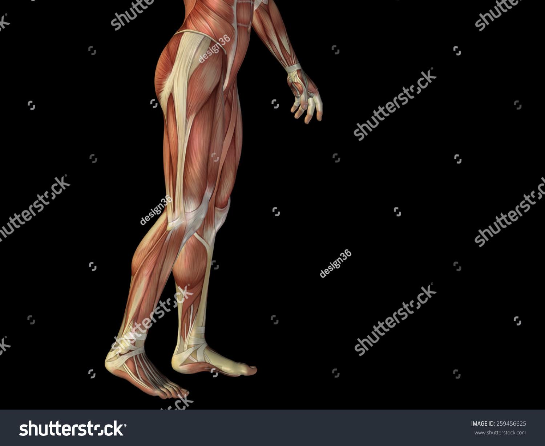 Concept Conceptual Human Man 3 D Anatomy Stock Illustration ...