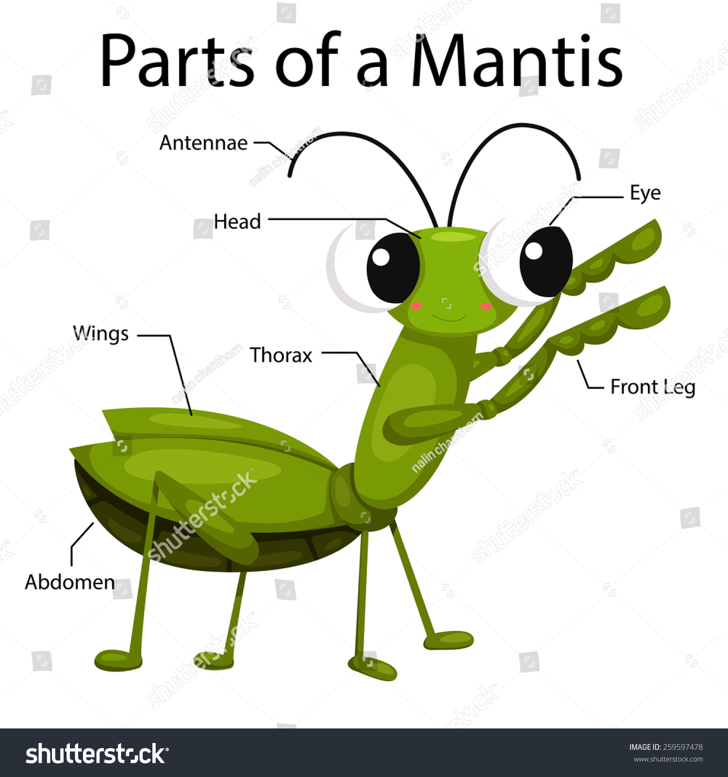 Illustrator Parts Mantis Stock Vector 259597478 - Shutterstock
