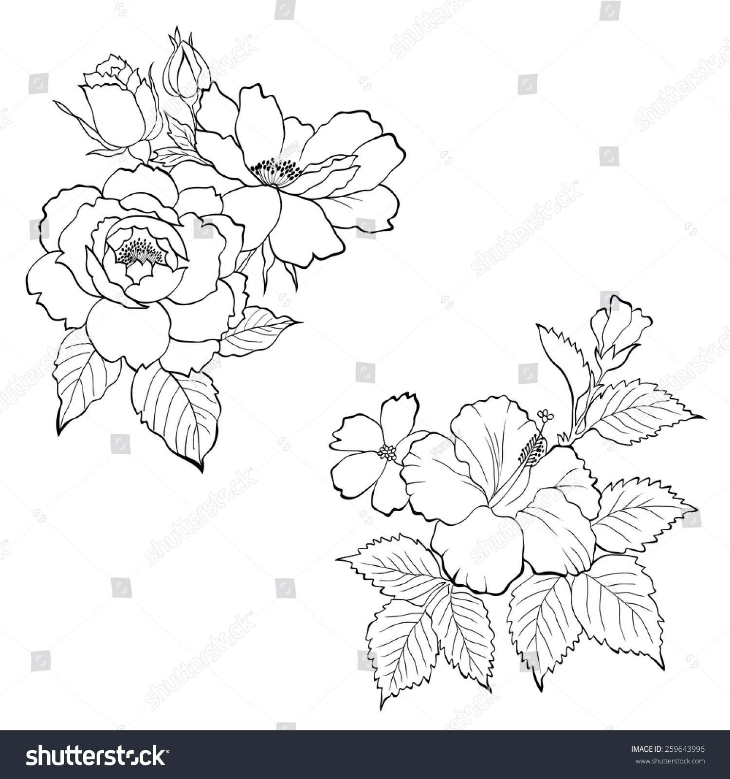 Hand Drawn Roses And Hibiscus Flowers Ez Canvas