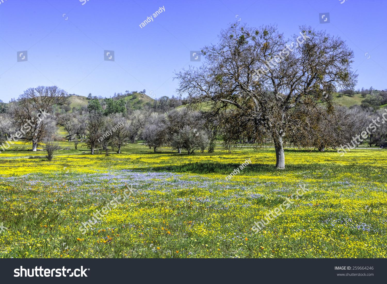 Royalty Free Bright Spring Yellow Flowers Desert 259664246 Stock