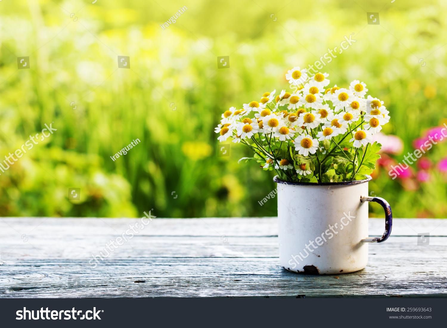 Summer or spring beautiful garden with daisy flowers #259693643