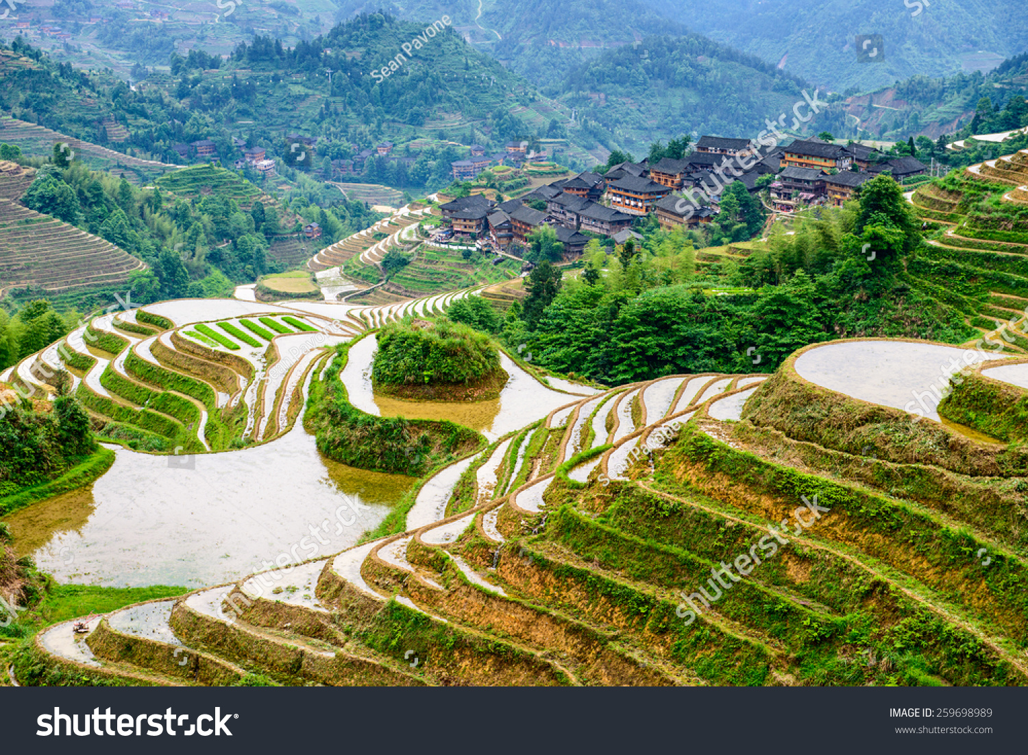 Yaoshan Mountain Guilin China hillside rice terraces landscape