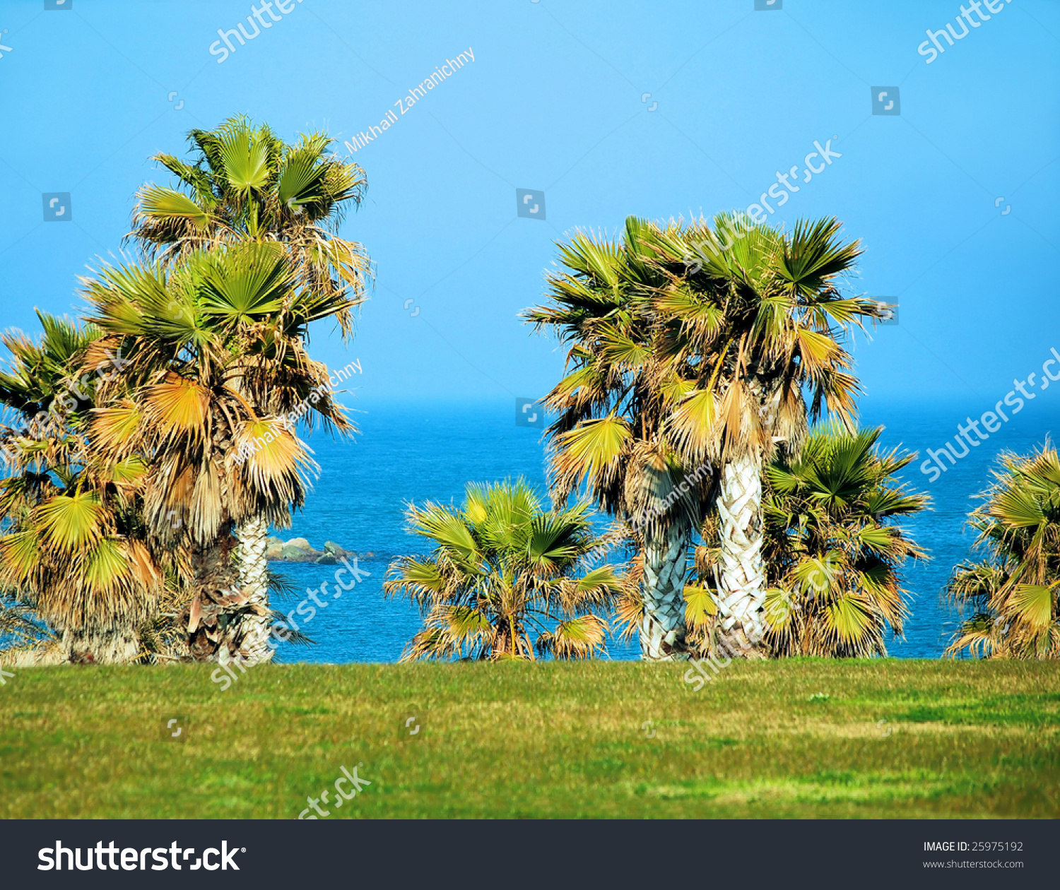 Palm Trees At Coast Of Mediterranean Sea In Barcelona