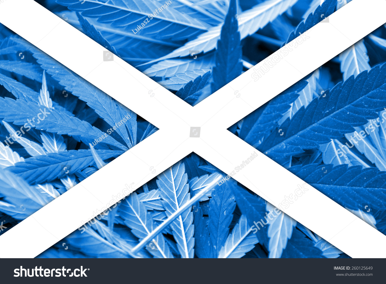scotland flag on cannabis background drug stock photo 260125649