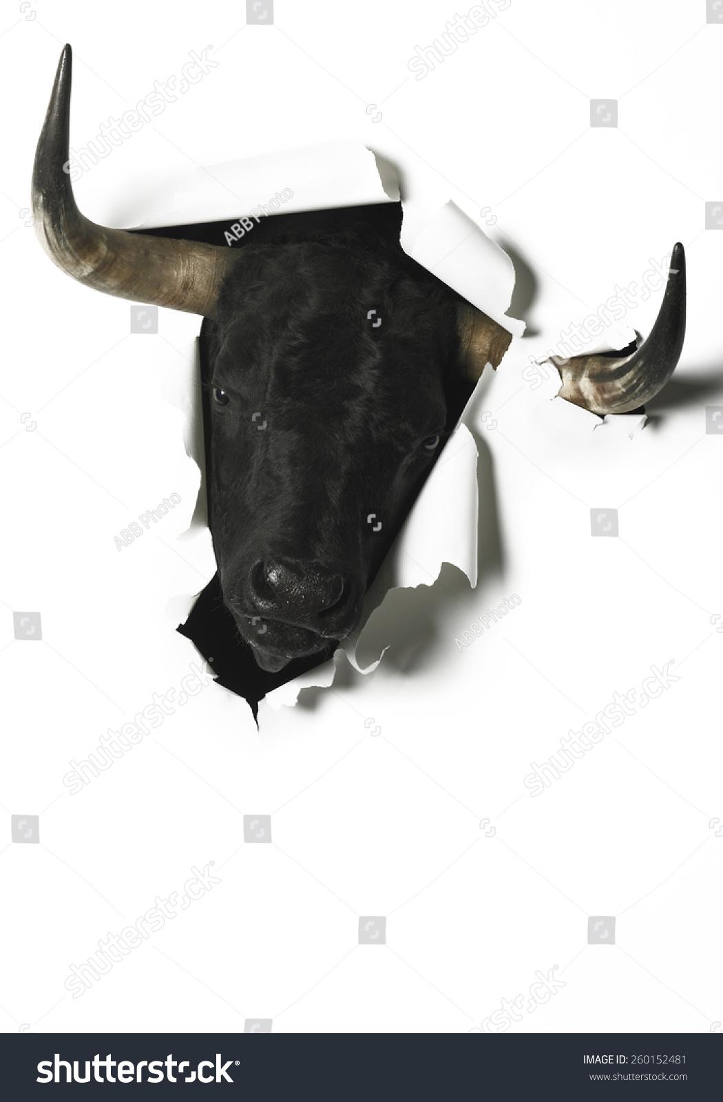 Bull fight essay