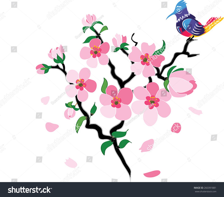 Sakura Blossoms Delicate Pink Flowers Sakura Stock Vector Royalty
