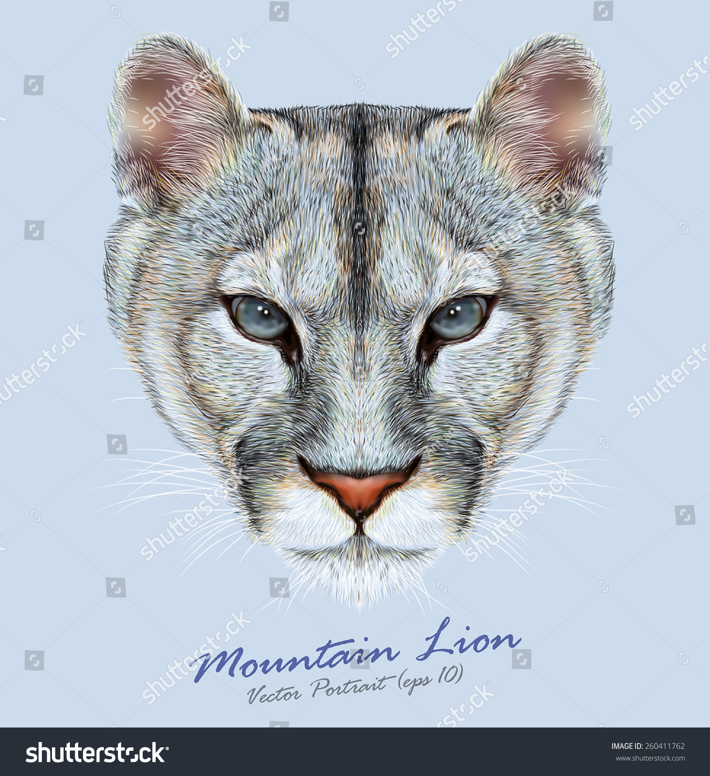 Abyssinian Cat Mountain Lion
