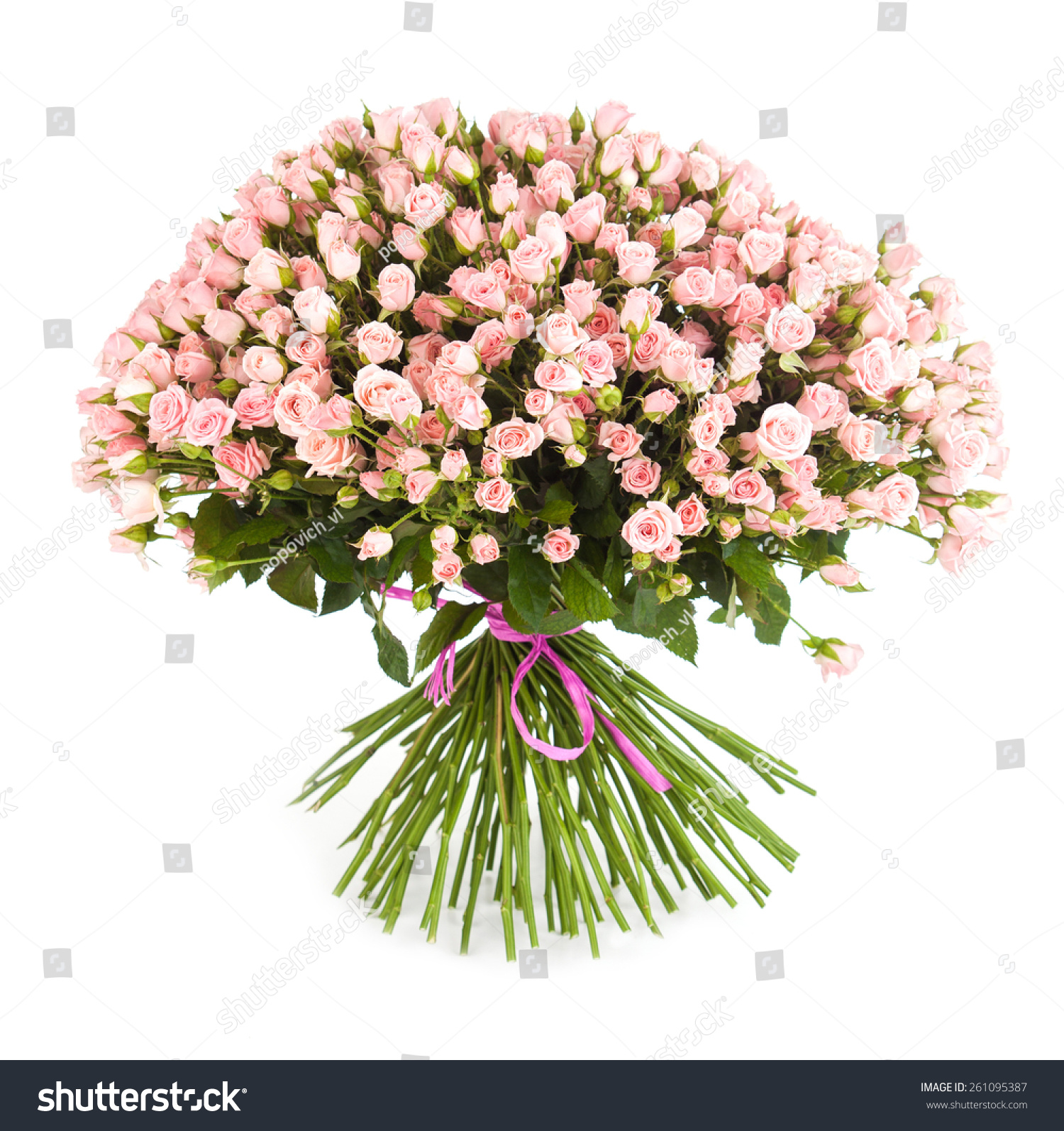 Big flower bouquet bright pink roses stock photo edit now big flower bouquet from bright pink roses isolated on white background closeup izmirmasajfo