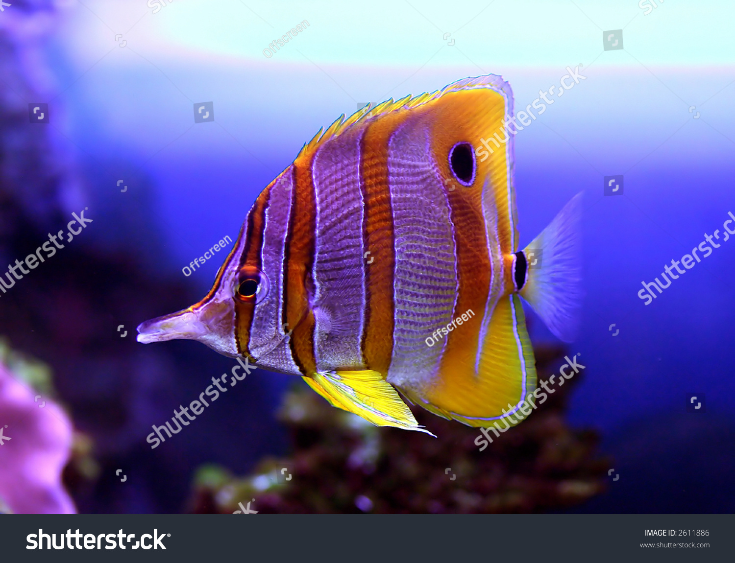 Color fish stock photo 2611886 shutterstock for What color are fish