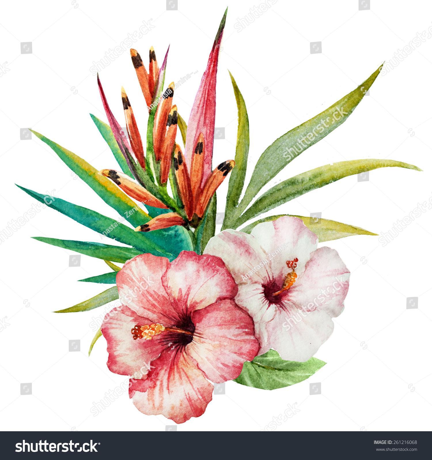 Watercolor Birds Paradise Jungle Hibiscus Flowers Stock Illustration