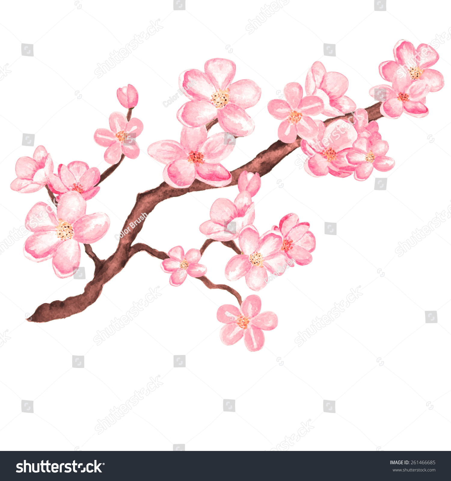 Butterfly And Flower Wall Stickers Watercolor Branch Blossom Sakura Cherry Tree Stock Vector