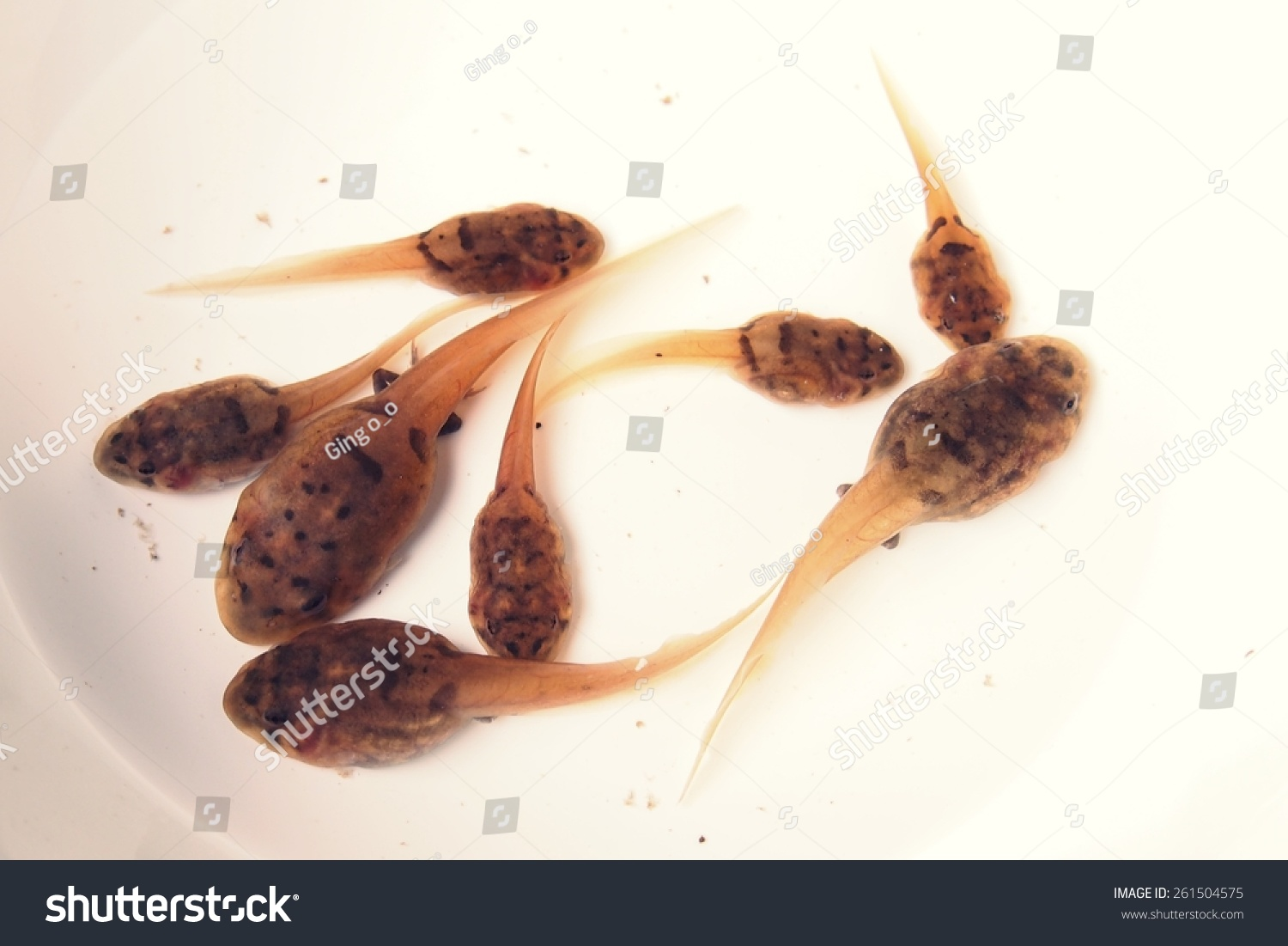 how to change tadpole water