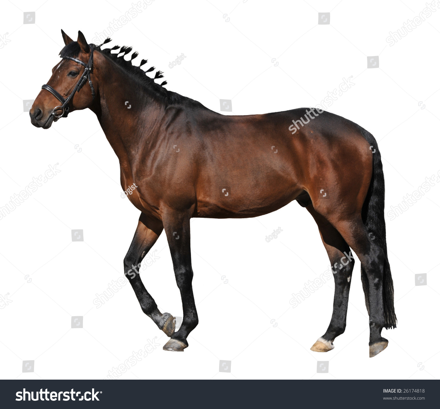 Brown Horse On White Background Stock Photo 26174818 ...