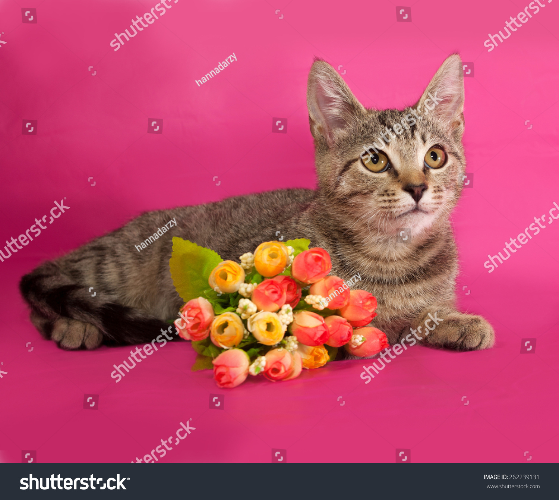 Striped Kitten Bouquet Flowers Lying On Stock Photo (Royalty Free ...