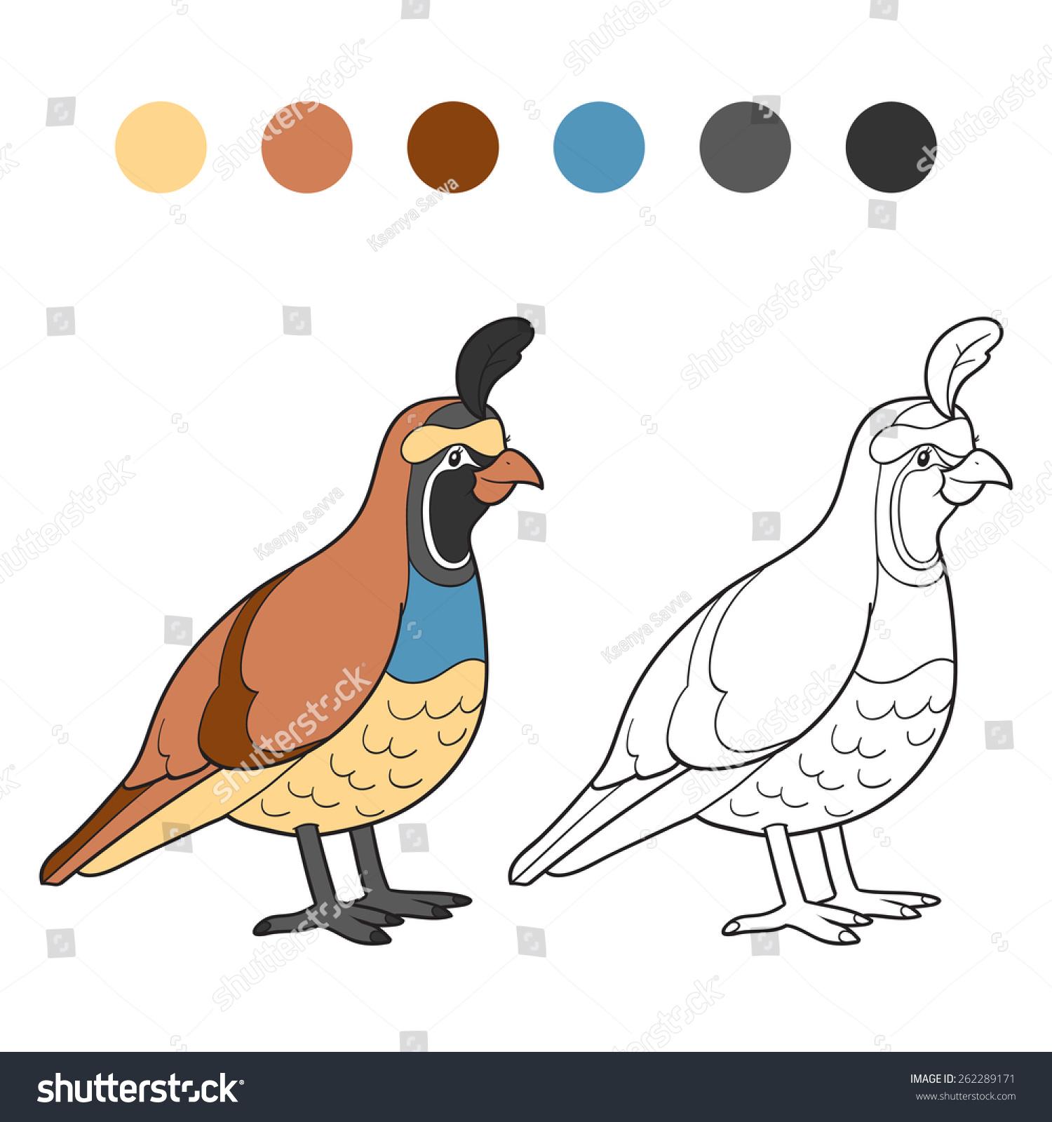 Coloring Book (quail, Bird)