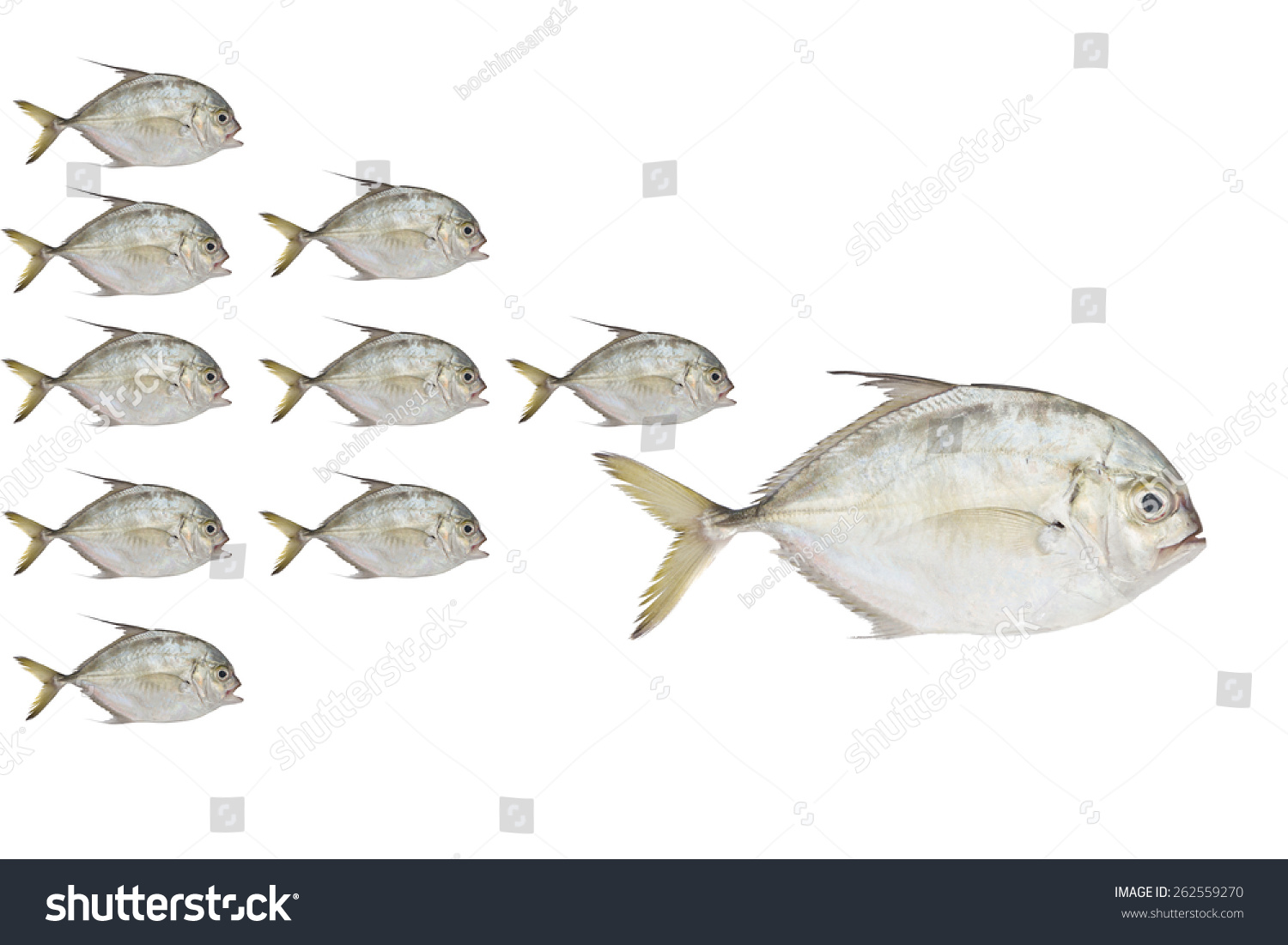 Little Fish Eat Big Fish Stock Photo 262559270 Shutterstock