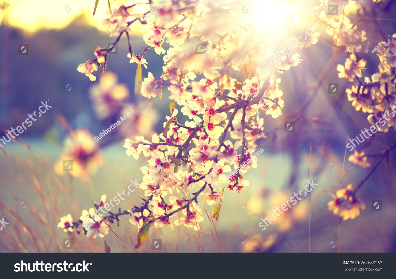 Spring Blossom Background Beautiful Nature Scene Stock Photo