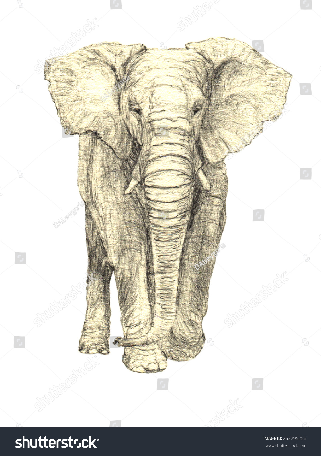 high quality hand drawn african elephant stock vector 262795256
