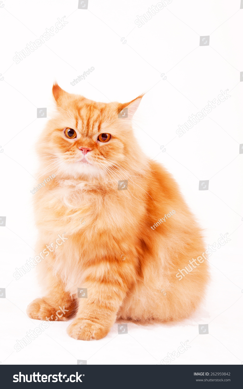Orange Cat Garfield Cat Sitting Cat Stock