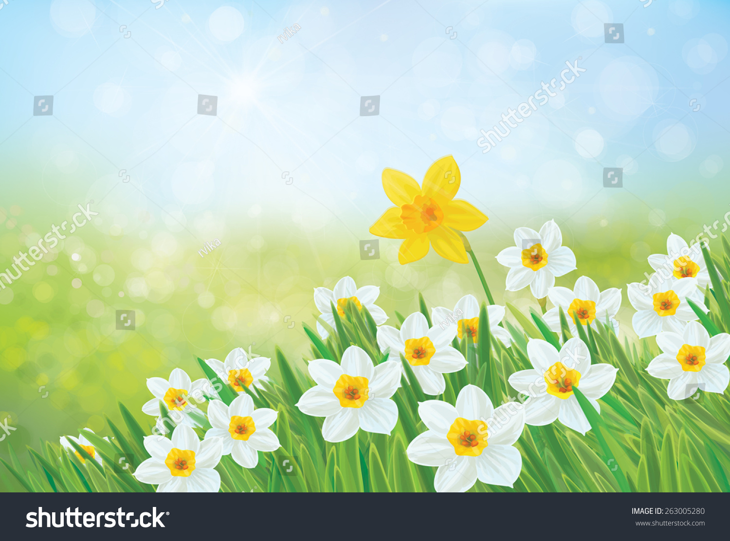 vector spring nature background daffodil flowers stock vector