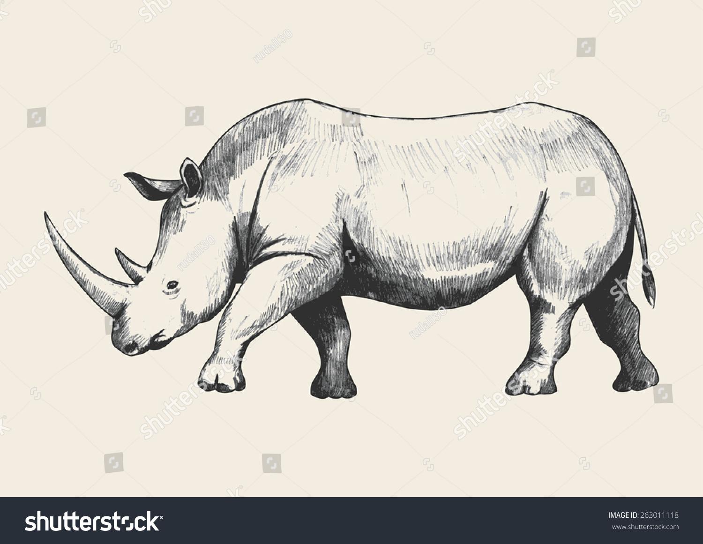 Pencil sketch of a rhino traced in adobe illustrator