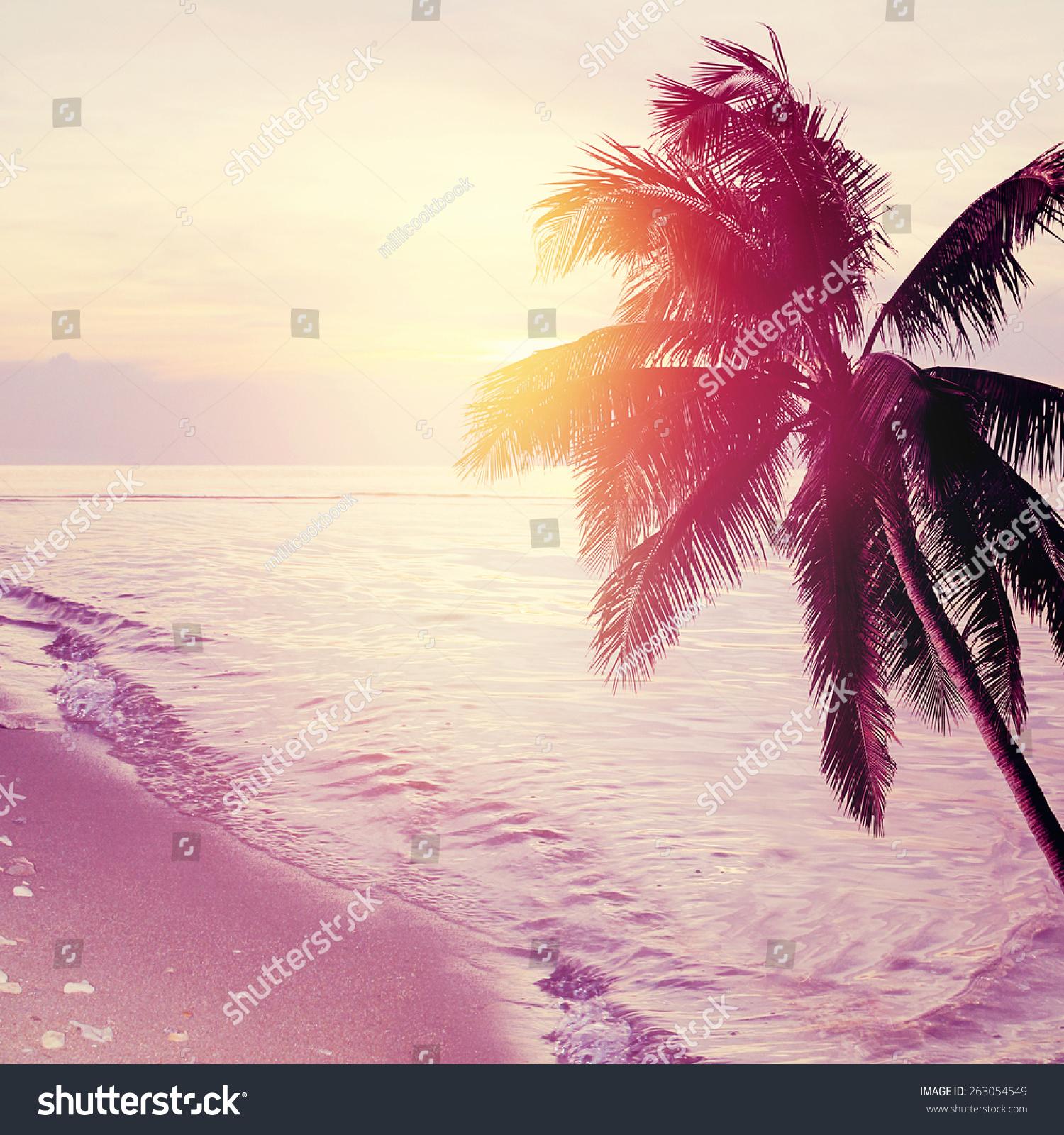Tropical Beach Sunset Background Palm Tree Stock Photo