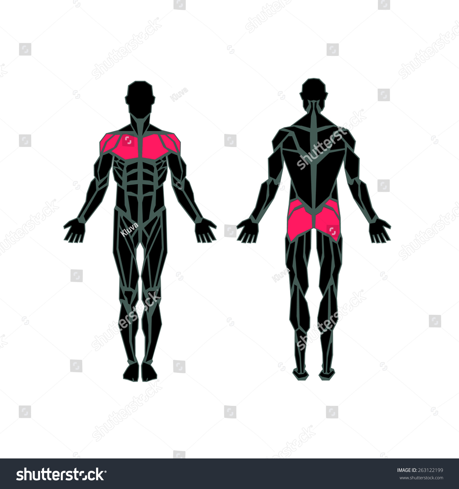 Polygonal Anatomy Male Muscular System Exercise Stock Vector ...