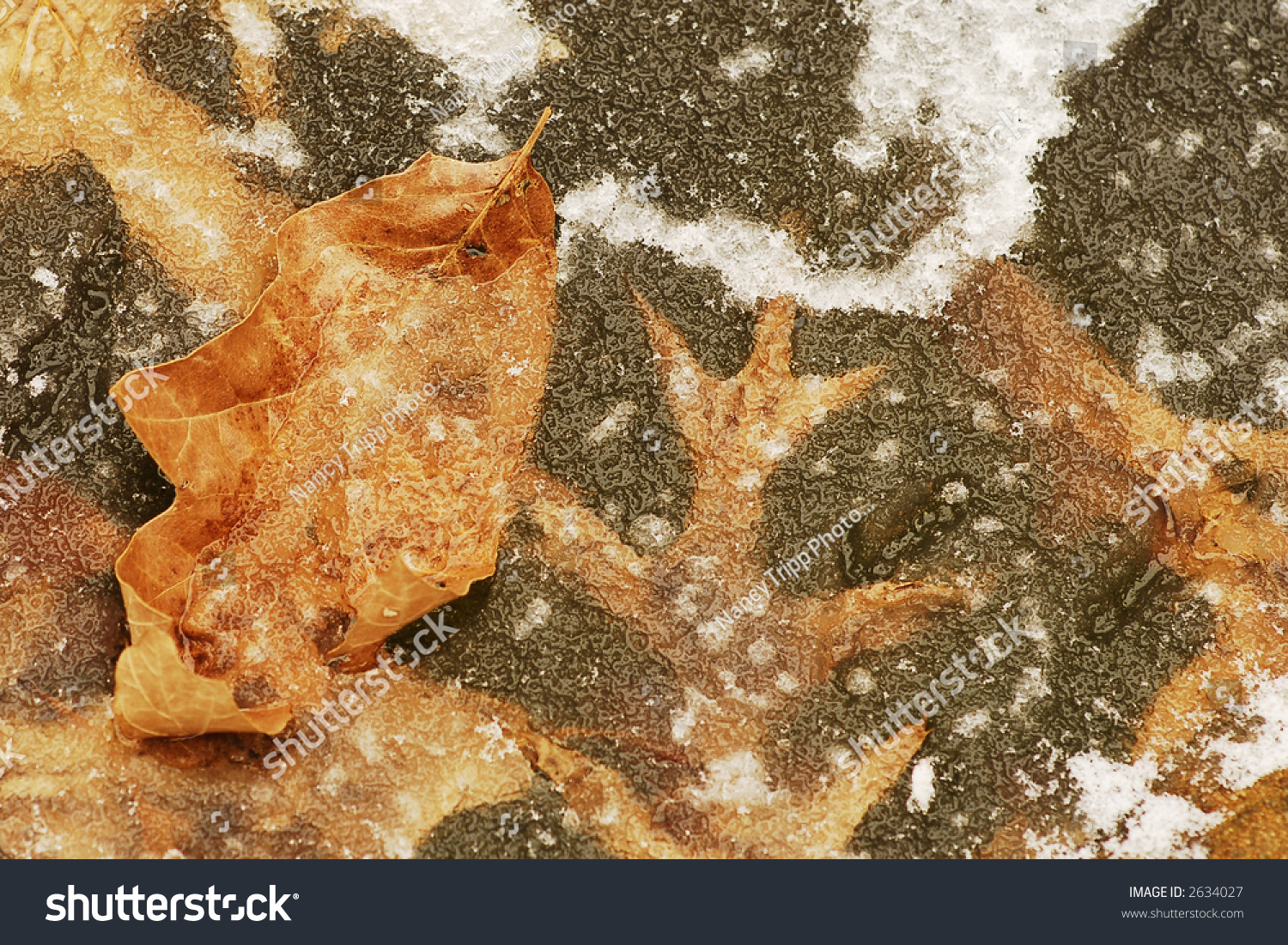 Frozen fish pond with leaves under the ice stock photo for Koi pond freezing