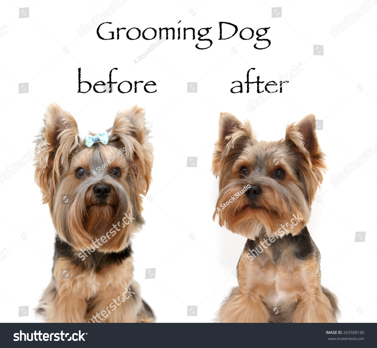Dog Grooming Before After Little Beautiful Stock Photo Edit Now