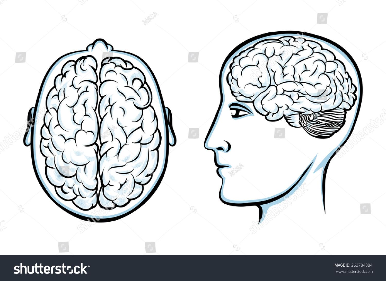 Silhouette Human Head Brain Psychology Anatomy Stock Illustration