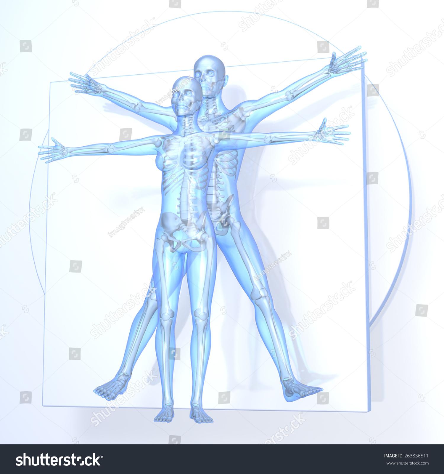 Leonardo Da Vinci Vitruvian Man Woman Stock Illustration 263836511 ...