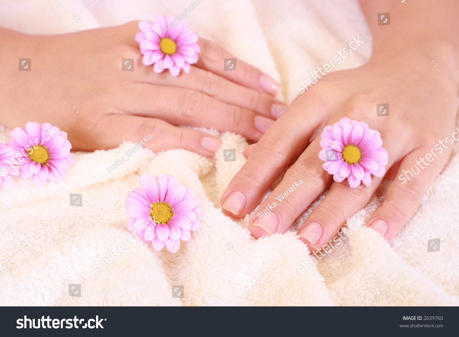 Beautiful Hands Daisy Flowers Hands Care Stock Photo Edit Now