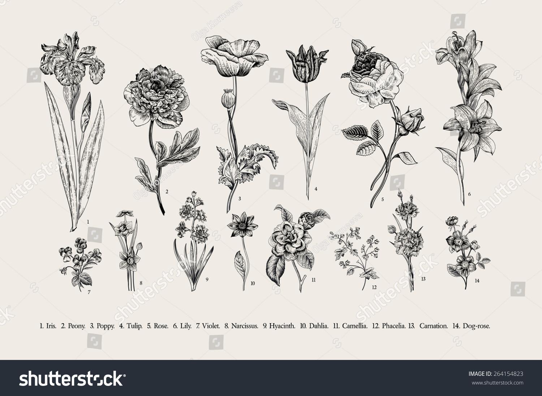 Royalty Free Botany Set Vintage Flowers Black And 264154823