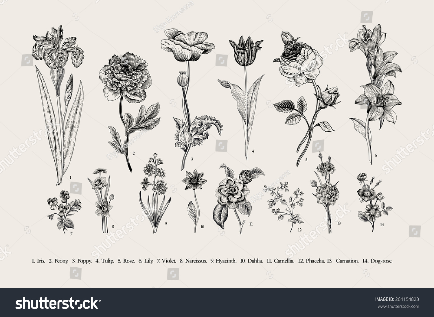 Vintage Flowers Part - 45: Vintage Flowers. Black And White Illustration In The Style Of Engravings