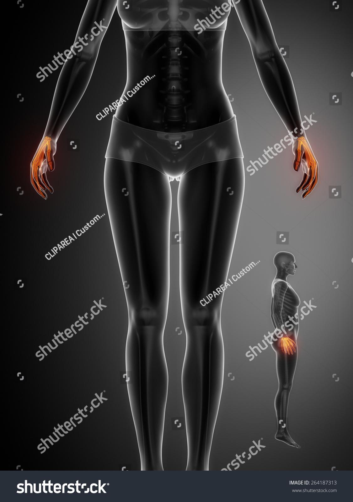 Wrist Bone Anatomy Xray Scan Stock Illustration 264187313 Shutterstock