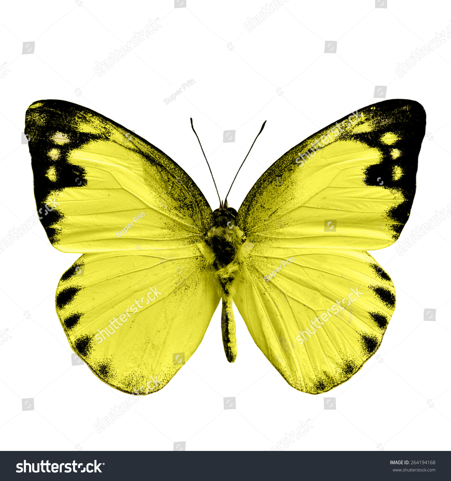 butterfly on yellow color - photo #13
