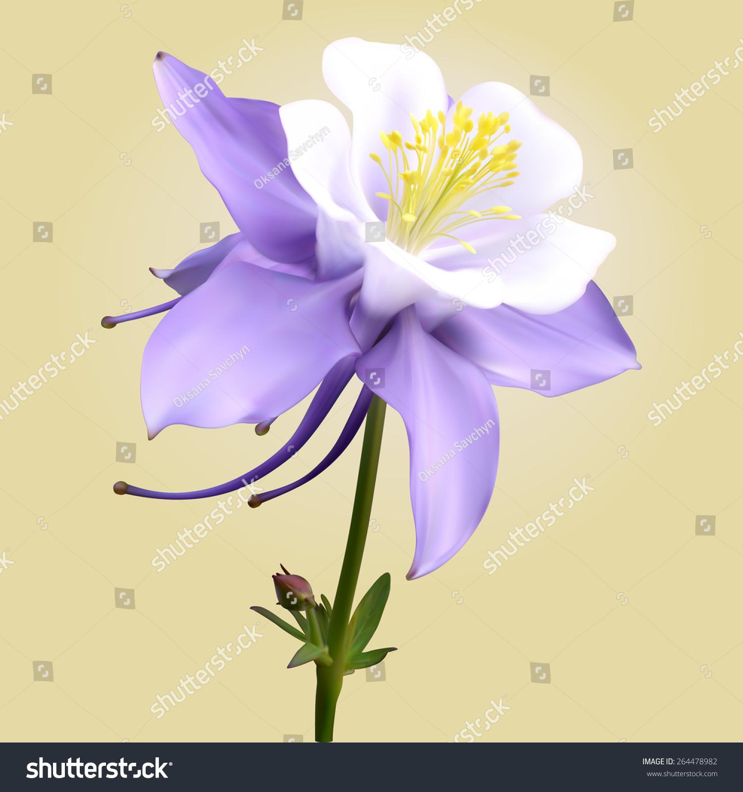 Columbine Flower Stock Vector Royalty Free 264478982 Shutterstock