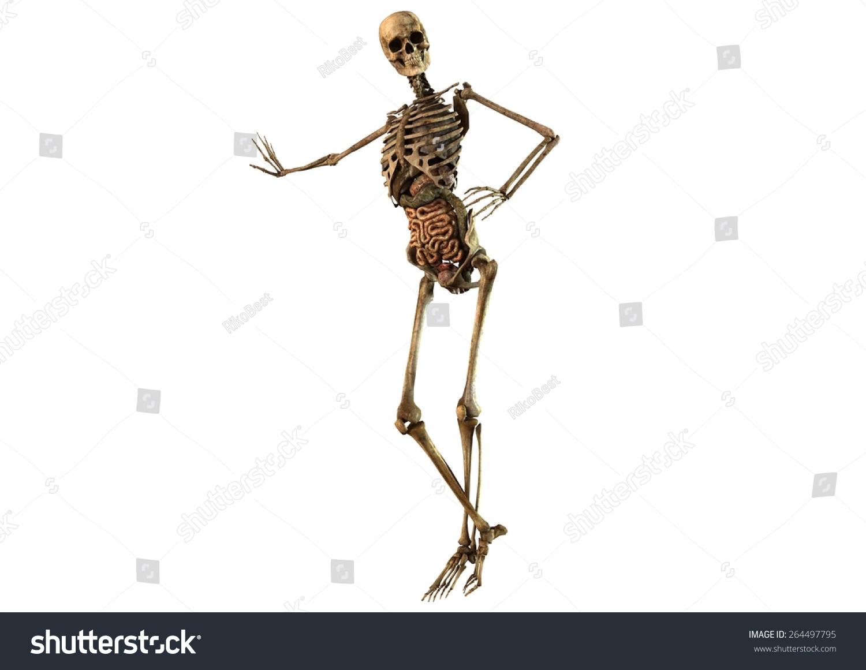 Female Skeleton Detailed Anatomy Organs Seperated Stock Illustration