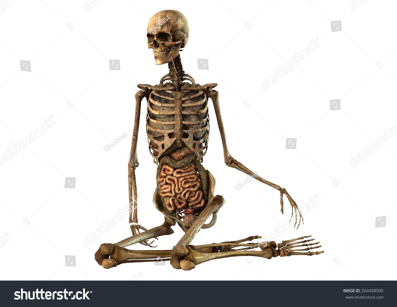 Female Skeleton Detailed Anatomy Organs Seperated Stock Illustration ...