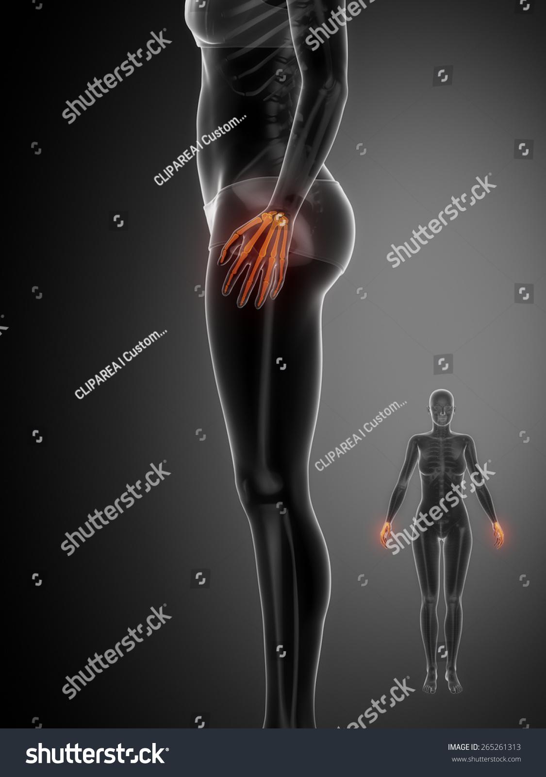Wrist Bone Anatomy Xray Scan Stock Illustration 265261313 Shutterstock