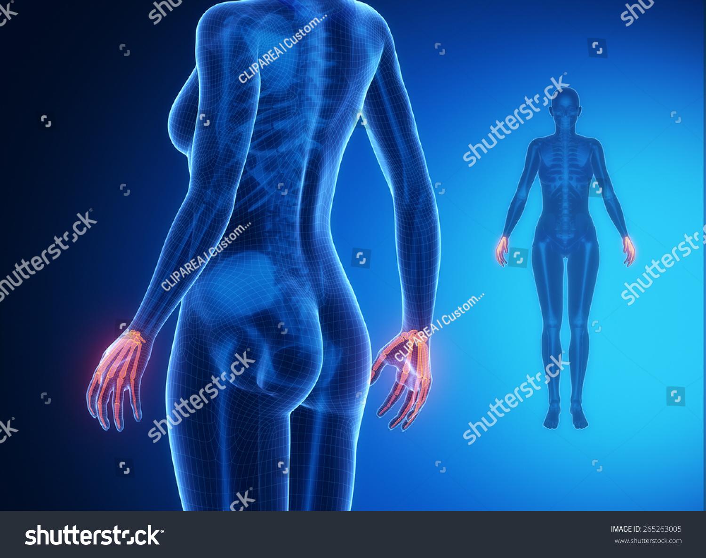 Hand bone anatomy x ray